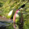 Natura sul fiume Stella