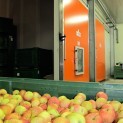 Conservazione mele