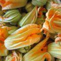 Fiori di zucchina Az. Agr. Biologica Loner